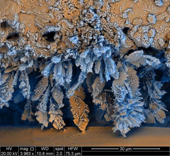 Εκπληκτικές εικόνες από μικροσκόπιο (12)