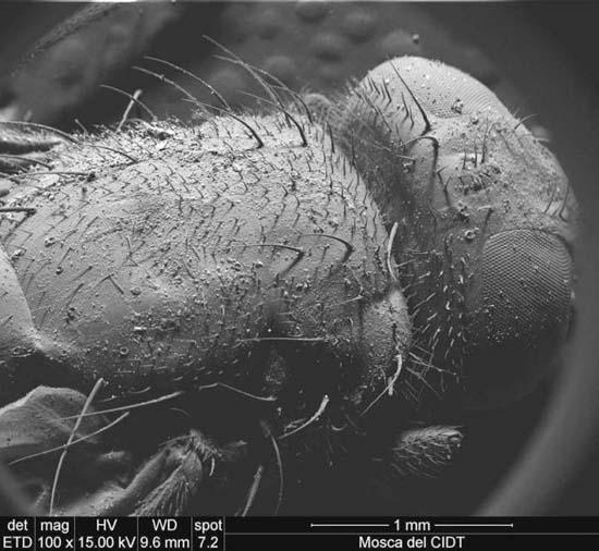Εκπληκτικές εικόνες από μικροσκόπιο (14)