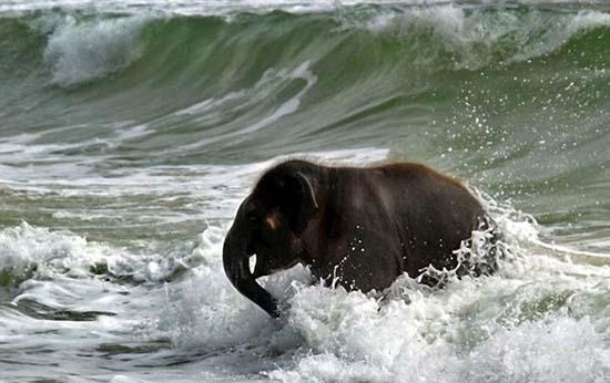 Ελεφαντάκι παίζει στην παραλία (3)