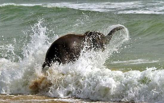 Ελεφαντάκι παίζει στην παραλία (4)