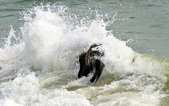 Ελεφαντάκι παίζει στην παραλία (5)
