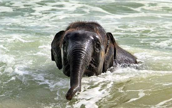 Ελεφαντάκι παίζει στην παραλία (6)