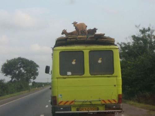 Εν τω μεταξύ στην Αφρική... (1)