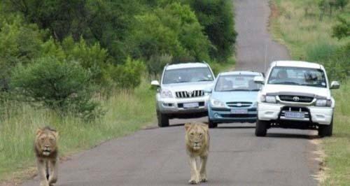 Εν τω μεταξύ στην Αφρική... (8)
