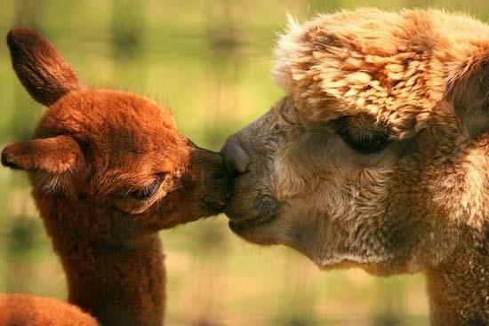 Ερωτευμένα ζώα (1)