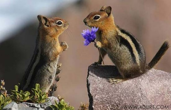 Ερωτευμένα ζώα (4)