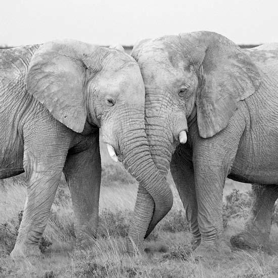 Ερωτευμένα ζώα (6)