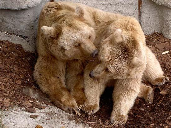 Ερωτευμένα ζώα (8)