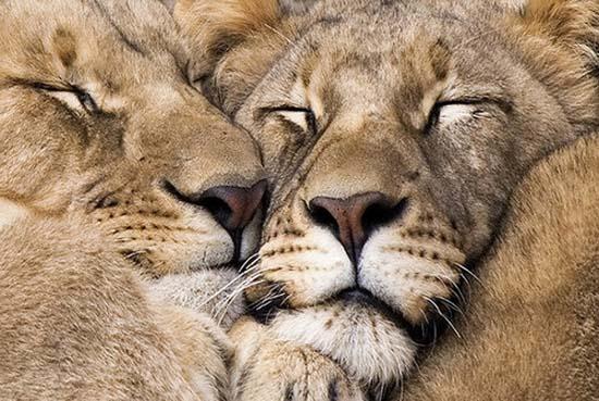 Ερωτευμένα ζώα (9)
