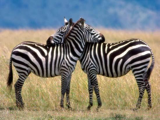 Ερωτευμένα ζώα (14)