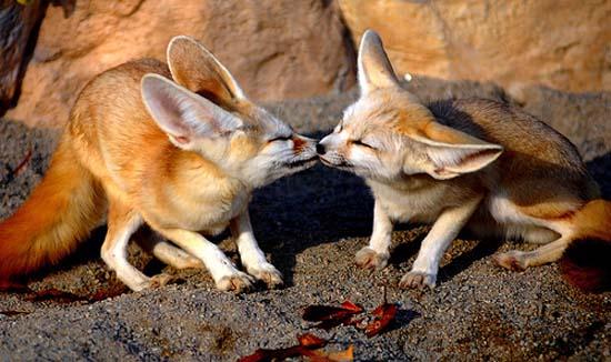 Ερωτευμένα ζώα (20)