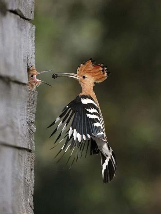 Φωτογραφίες ζώων τραβηγμένες την κατάλληλη στιγμή (7)