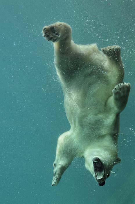 Φωτογραφίες ζώων τραβηγμένες την κατάλληλη στιγμή (10)