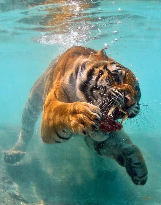 Φωτογραφίες ζώων τραβηγμένες την κατάλληλη στιγμή (11)