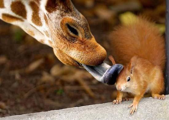 Φωτογραφίες ζώων τραβηγμένες την κατάλληλη στιγμή (20)