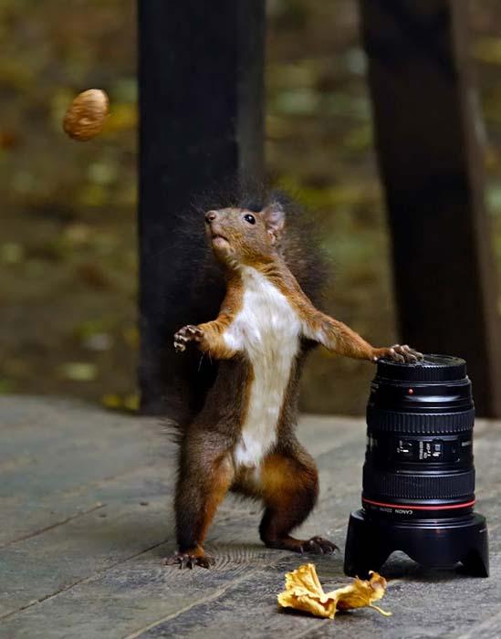 Φωτογραφίες ζώων τραβηγμένες την κατάλληλη στιγμή (22)