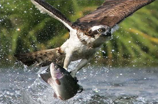Φωτογραφίες ζώων τραβηγμένες την κατάλληλη στιγμή (25)