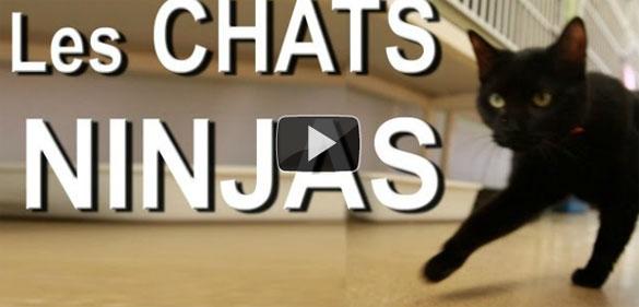 Γάτες Ninja ζουν ανάμεσα μας