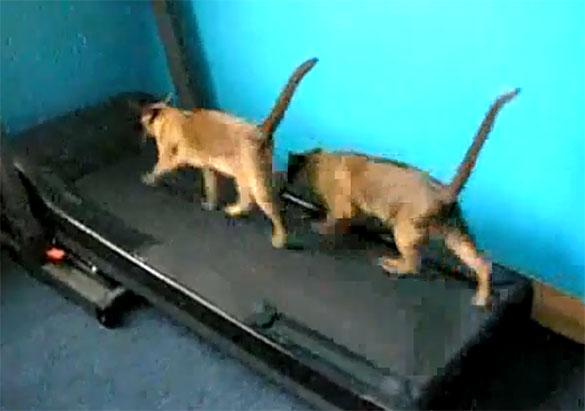 Γάτες στον διάδρομο γυμναστικής