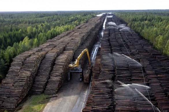 Ο μεγαλύτερος χώρος αποθήκευσης ξυλείας στον κόσμο (1)