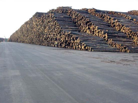 Ο μεγαλύτερος χώρος αποθήκευσης ξυλείας στον κόσμο (2)