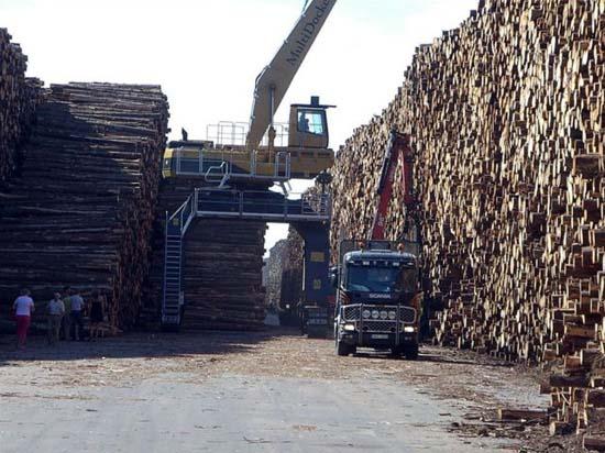 Ο μεγαλύτερος χώρος αποθήκευσης ξυλείας στον κόσμο (3)