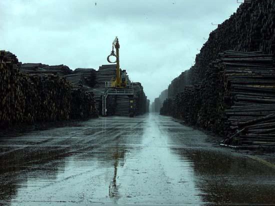 Ο μεγαλύτερος χώρος αποθήκευσης ξυλείας στον κόσμο (4)