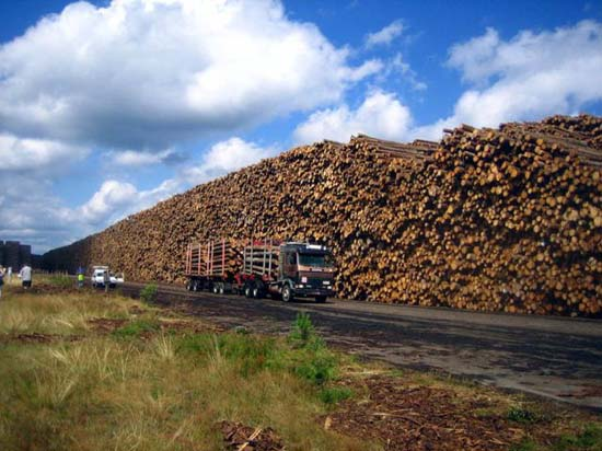 Ο μεγαλύτερος χώρος αποθήκευσης ξυλείας στον κόσμο (6)