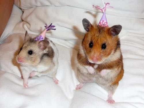 Όταν τα ζώα κάνουν πάρτι (1)