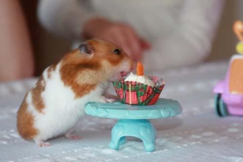 Όταν τα ζώα κάνουν πάρτι (3)