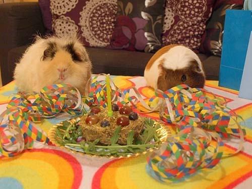 Όταν τα ζώα κάνουν πάρτι (4)