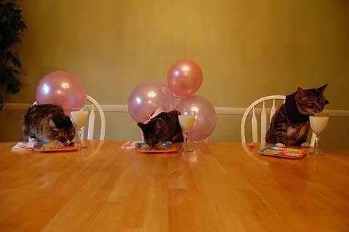 Όταν τα ζώα κάνουν πάρτι (5)
