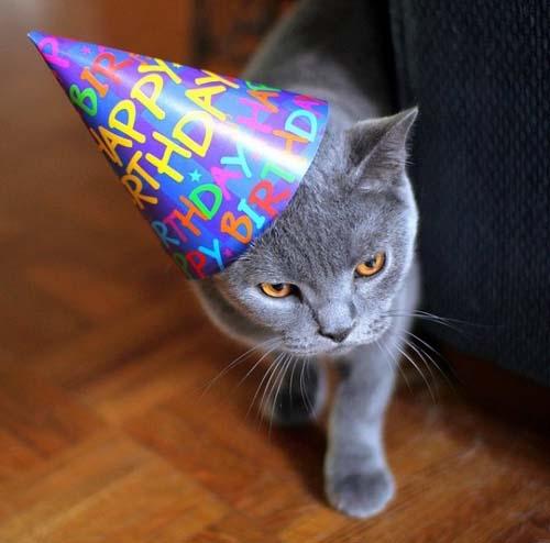 Όταν τα ζώα κάνουν πάρτι (6)