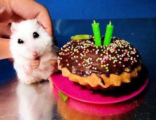 Όταν τα ζώα κάνουν πάρτι (7)