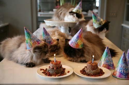 Όταν τα ζώα κάνουν πάρτι (8)