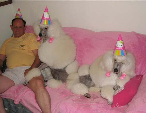Όταν τα ζώα κάνουν πάρτι (10)