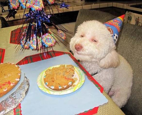 Όταν τα ζώα κάνουν πάρτι (11)