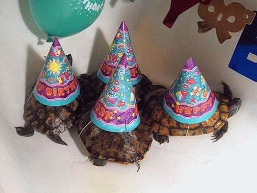 Όταν τα ζώα κάνουν πάρτι (12)