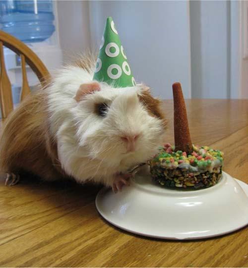 Όταν τα ζώα κάνουν πάρτι (13)