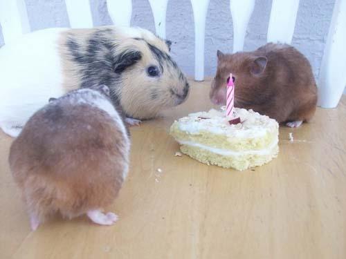 Όταν τα ζώα κάνουν πάρτι (16)