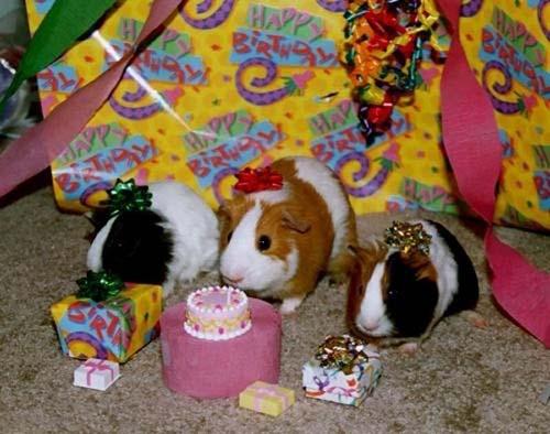 Όταν τα ζώα κάνουν πάρτι (18)