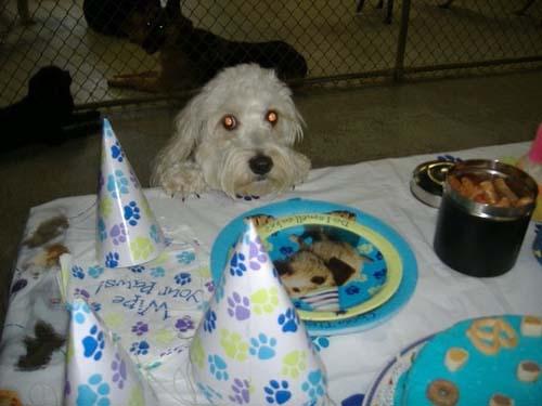 Όταν τα ζώα κάνουν πάρτι (20)