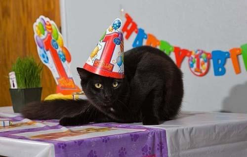 Όταν τα ζώα κάνουν πάρτι (21)