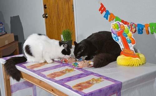Όταν τα ζώα κάνουν πάρτι (22)