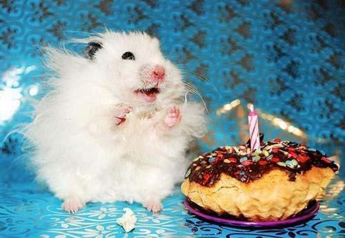 Όταν τα ζώα κάνουν πάρτι (23)