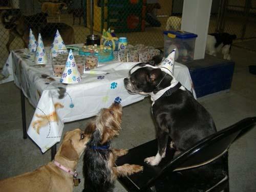 Όταν τα ζώα κάνουν πάρτι (25)