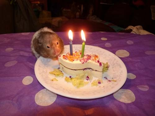Όταν τα ζώα κάνουν πάρτι (26)