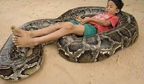 Σοκαριστικές εικόνες με παιδιά και επικίνδυνα ζώα (1)