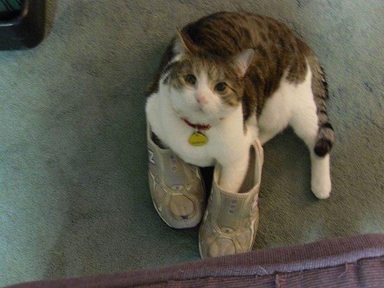 Παπουτσωμένες γάτες (1)