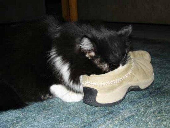Παπουτσωμένες γάτες (2)